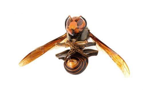 蜂に刺された時にやるべき事と効果の高い処方薬