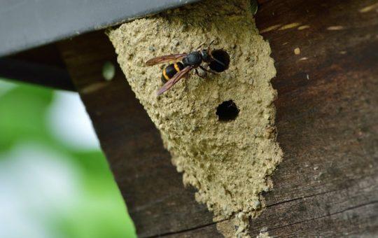 プロが伝授!土のような蜂の巣は放置?駆除? 効果的な対処法