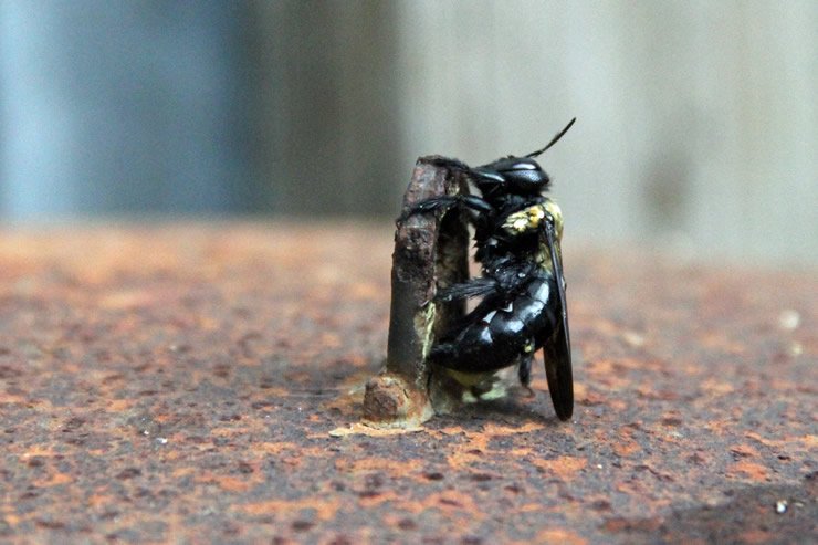 土のような巣、土の中に巣を作る蜂の種類