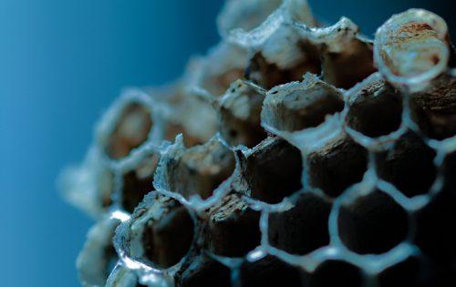 蜂の巣の作り方からわかる「蜂の巣を作らせない」予防法