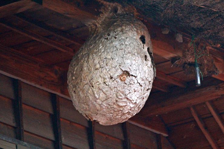 蜂の営巣本能