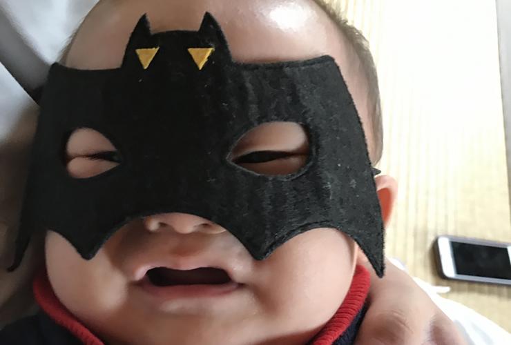 【もしも保護したらどうする!?】コウモリの赤ちゃんの育て方と対処法