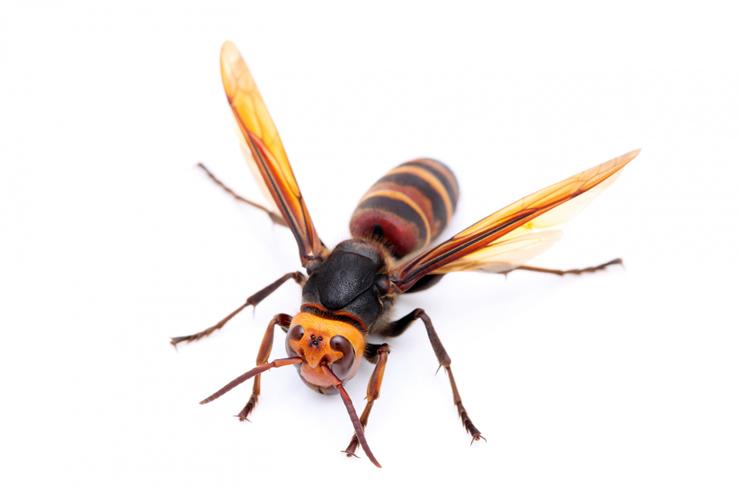刺されると危ない蜂の種類