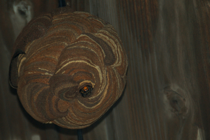 巣は徐々に大きくなり、最後には『マーブル模様』の禍々しい巣が完成