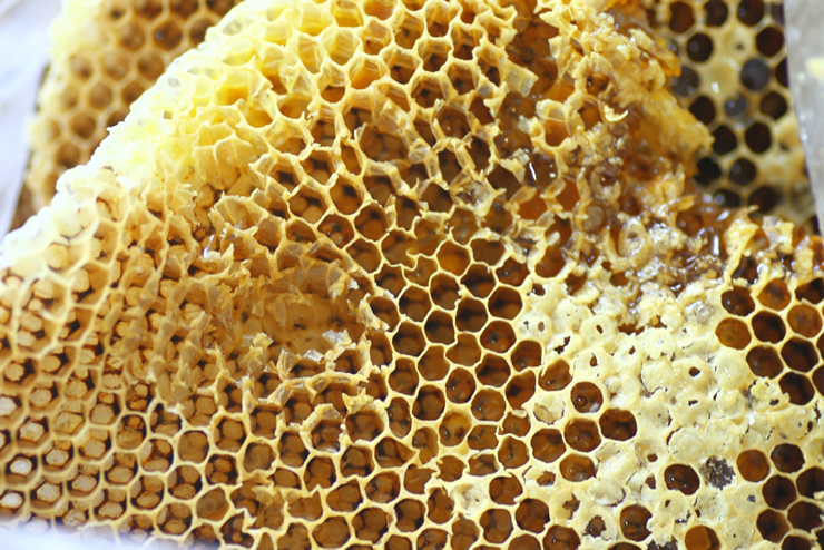 ミツバチの場合
