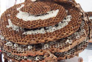 """こんな蜂の巣に注意!種類別""""蜂の巣の特徴""""と理想的な駆除方法"""