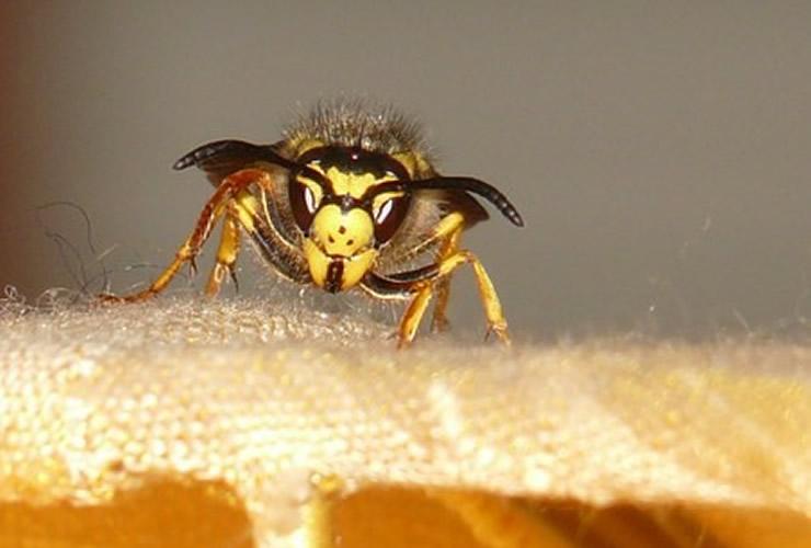 自宅でスズメバチに巣を作らせない対策