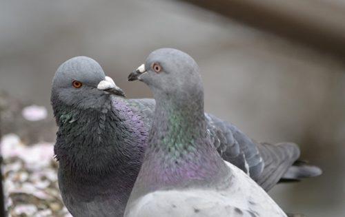 鳩のふん害と騒音を完全に遮断する『ベランダの鳩対策』
