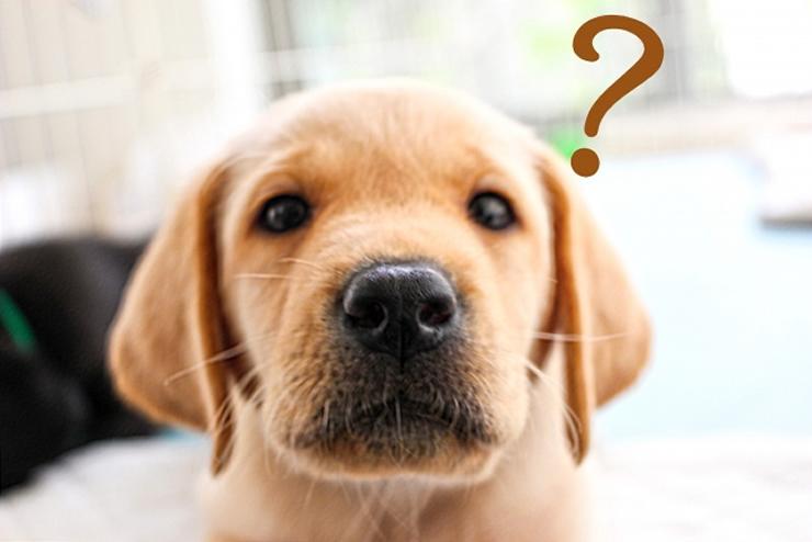 毒餌のペット(犬、猫)への影響