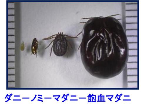 京都市情報館「衛生動物だより」No.047