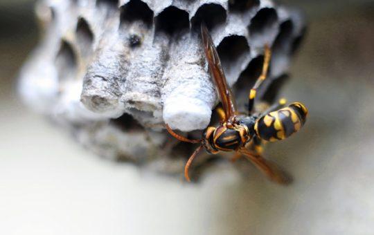 もう怖くない!体験談から学ぶ蜂の退治方法と安全な蜂の対処法4選