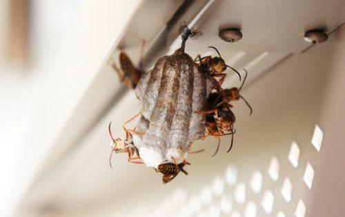 蜂の巣退治で素人が作業可能な4つの条件と難易度が高く危険な駆除