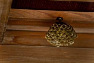 初めてでも安心!簡単・最安、自分で出来る蜂の巣駆除法完全ガイド