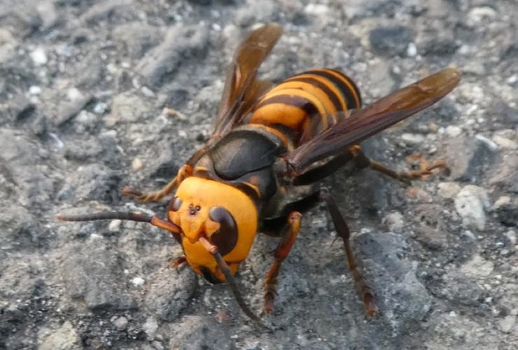 スズメバチ駆除を安心安全にゼロ円で成功させる5つのステップ