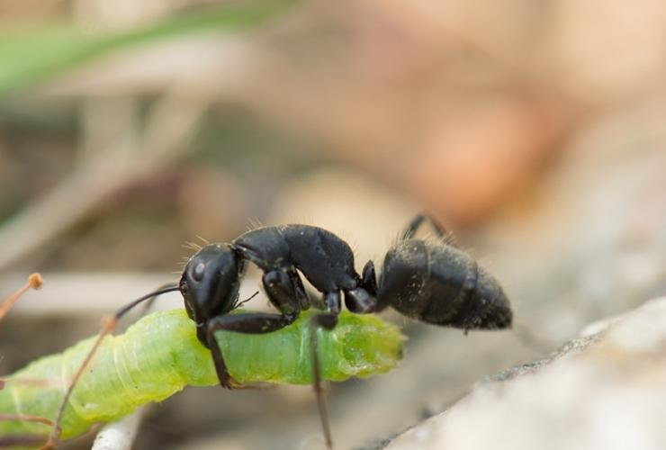 初めてでも失敗しない黒アリ完全駆除までの4つの手順
