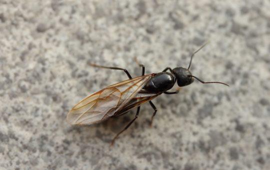 大量発生した羽アリを自力で完璧に駆除する4つのステップ