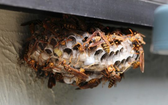 素人でも安全確実にハチを駆除できる最強蜂スプレー3選