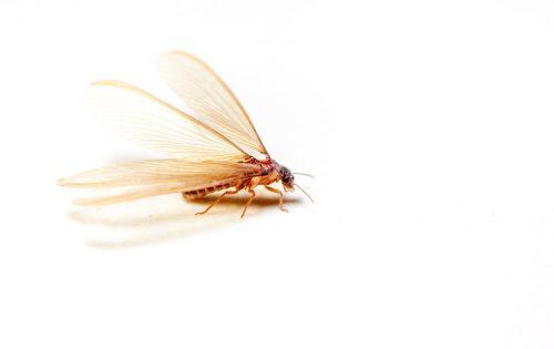 3分でわかる!羽アリが大量発生する原因と害のある羽アリの見分け方