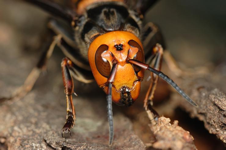 【応急処置も解説!】オオスズメバチを駆除する方法と予防策