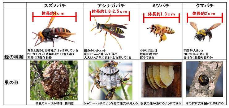 蜂の種類と巣の形