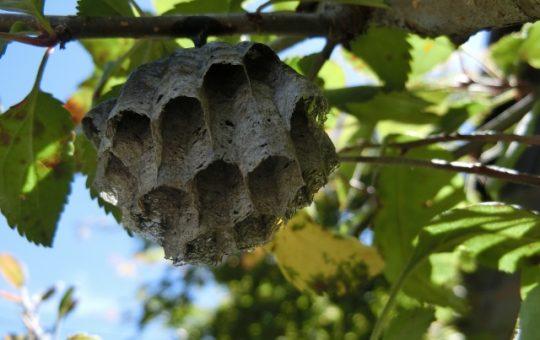 蜂の種類別│巣の駆除料金相場と安く済ませる3つの方法