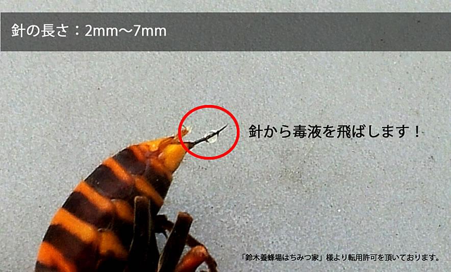 針の長さも2mm~7mmと最大級。
