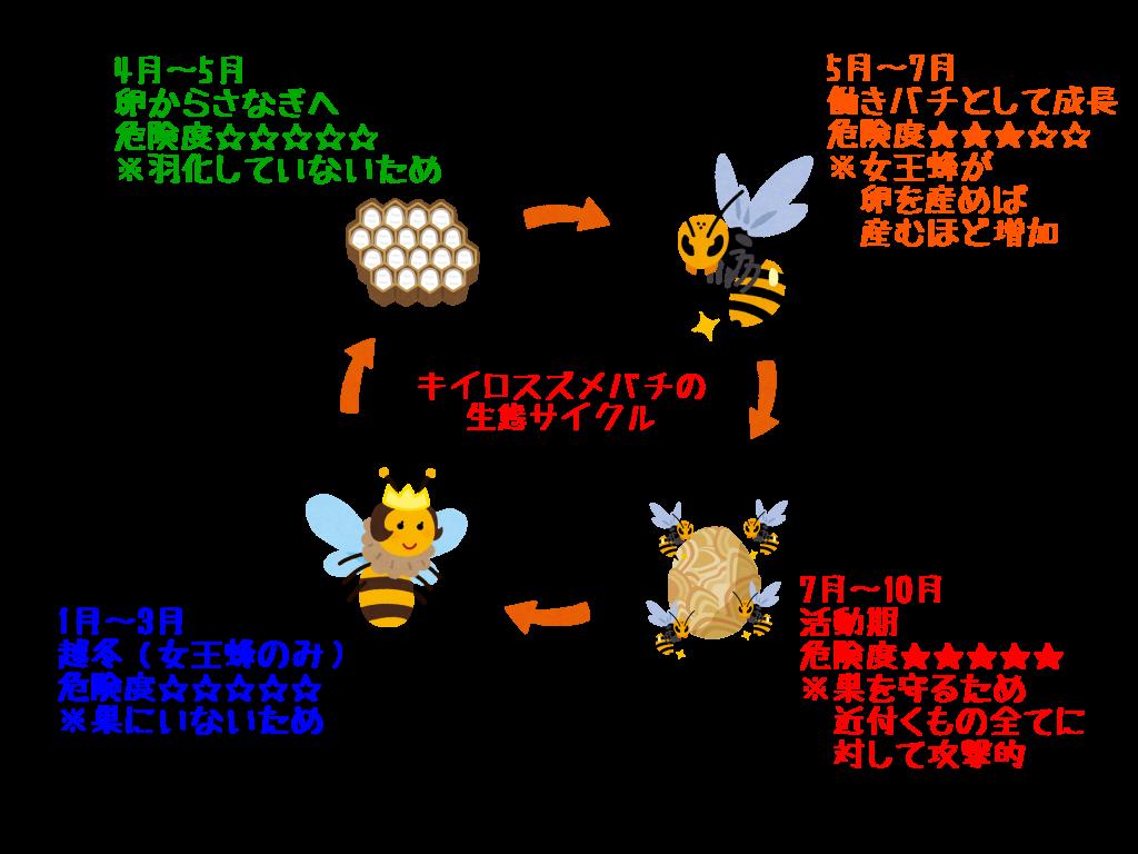 キイロスズメバチの生態サイクル