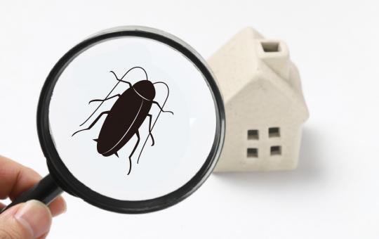 3条件で良いゴキブリ駆除業者がわかる!優良業者4選とプロの長所