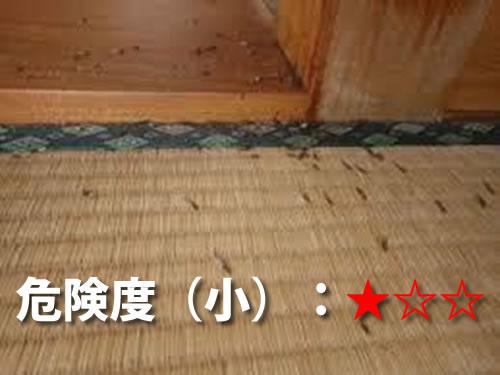和室(畳)のシロアリ被害3