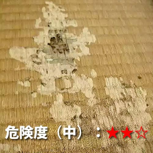 和室(畳)のシロアリ被害2