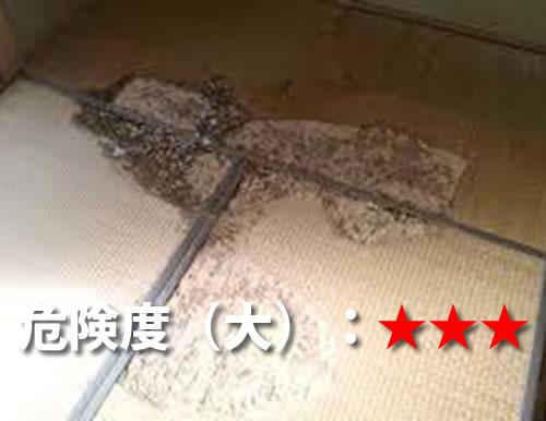 和室(畳)のシロアリ被害1
