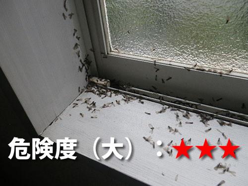 洋室のシロアリ被害