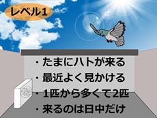 鳩の被害レベル1