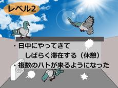 鳩の被害レベル2