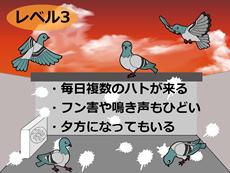 鳩の被害レベル3