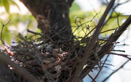 自宅に鳩の巣発見!?今すぐ取るべき行動と巣作り回避法