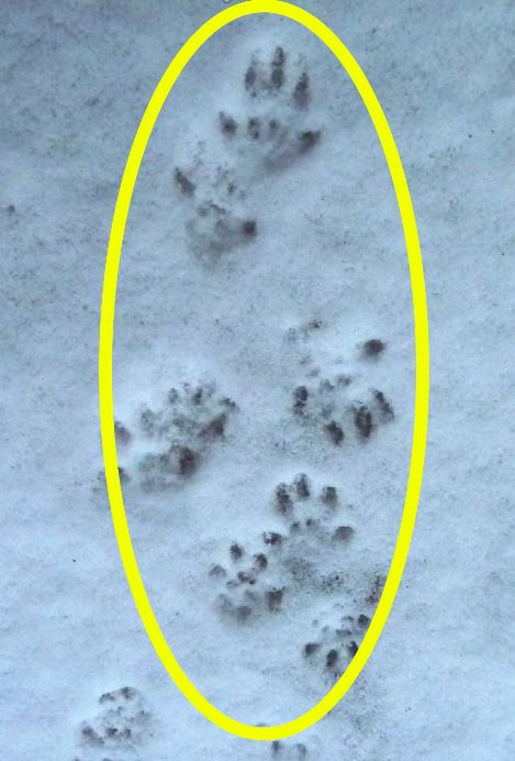 ネズミの足跡3
