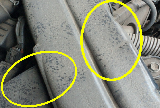 ネズミの足跡5