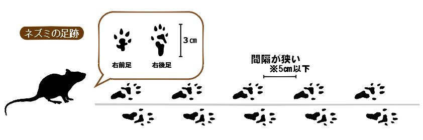 ネズミの足跡