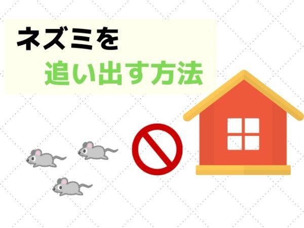 自力でネズミを追い出す方法|4時間で駆除から再侵入防止までできる